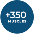 350_muscles